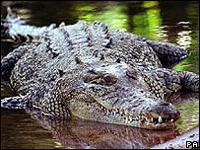 На борьбу с преступностью бросят крокодилов