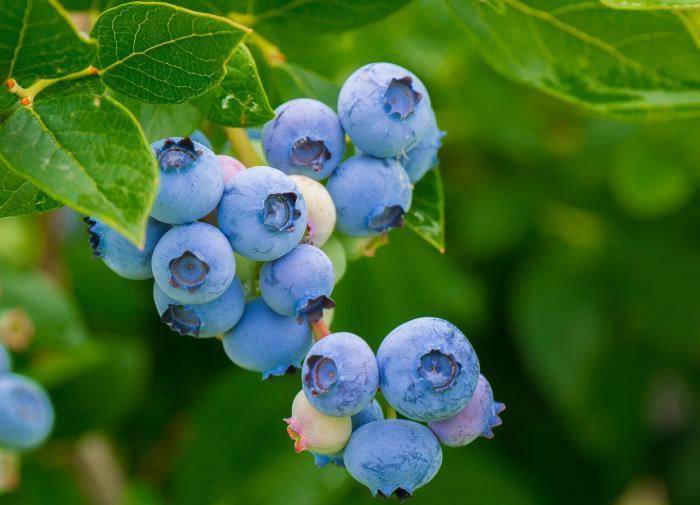 Эжен Ионеско (слева) и Михаил Волохов