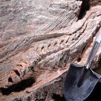 Беременный динозавр 25 лет прятался под столом