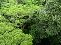 Биологи извинились перед зелеными растениями