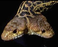 Двуполый Змей-Горыныч умер без наследника