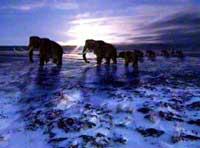 Русская мафия хочет клонировать мамонтов. Фото Spiegel TV