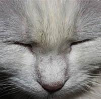 27-летняя кошка получила инфаркт