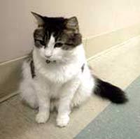Кот предсказал 25 смертей