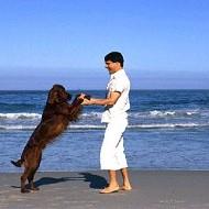 Пляжи для собак появятся на Средиземном море