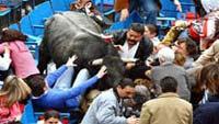 В Мексике бык перепутал VIP-зрителей корриды с тореадором