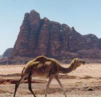 Отдохнуть в Иордании стало проще