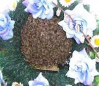 Пчёлы нашли пасечника после смерти