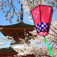 Япония: сакура зацветает раньше на 2 недели