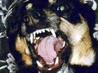 Бешеные собаки готовят смертельный марафон