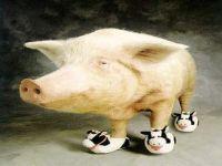 Какую свинью подложит Новый год?