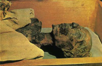 В Интернете продавали волосы фараона Рамсеса II