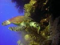 Подводный мир: простые правила удачной фотосъемки
