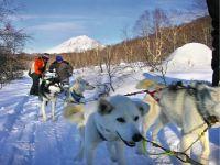 В Челябинске стартует чемпионат России по гонкам на собачьих