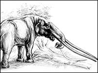 Мамонты утерли нос африканским слонам