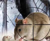 Охота на крыс стала прибыльной
