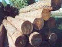 В Хабаровском крае раскрыт канал контрабандной поставки леса в