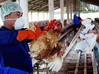 Казахстан разработал вакцину против птичьего гриппа