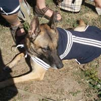 Служебная собака помогла найти ребенка