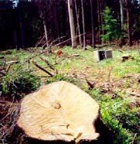 Лесоруб обривает ежа за 13 секунд