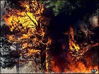 Глобальное потепление уничтожит сибирскую тайгу!