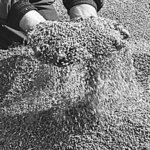 Зерновая компания