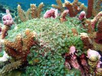 «Убийственный сговор» бактерий с водорослями