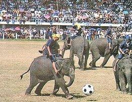 В Тайланде состоялся слонобол