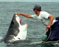 У берегов Кубы появились трехметровые акулы