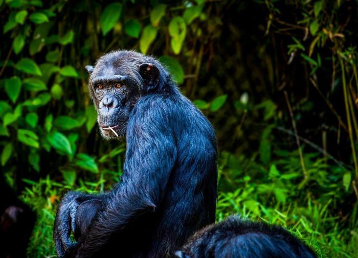 За черепахами следят из космоса