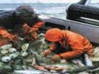 У Южных Курил задержано японское судно-браконьер