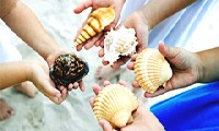 Самые красивые раковины - на пляже Флориды