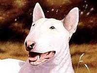 Бультерьера украли и съели, приняв за свинью