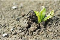 Точкам стихийного роста не хватает финансового полива