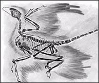 Динозавр-биплан оказался ошибкой природы