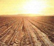 Инвесторы начинают скупать плодородные земли