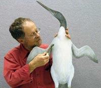 Динозавры погибли на глазах у пингвинов