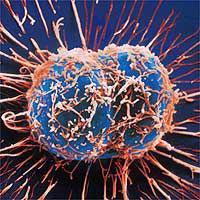 Учёные раскрасят раковые клетки