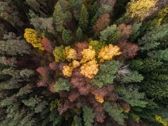 К 2050 году исчезнут леса, а людей ждет голод