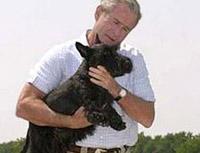 Блэр снялся в фильме вместе с терьерами Буша