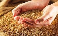 Зерновой экспорт: без рекордов и антирекордов