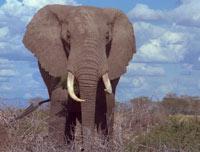 В Питере ищут приметившего слона шутника