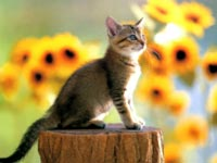 Разносчиком смерти станет кошка?