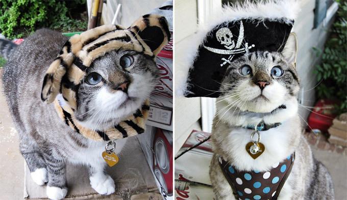 Животные, которые взорвали интернет Очаровательный косоглазый кот по кличке Спанглс стал настоящей интернет-сенсацией после того, как его хозяйка из Южной Каролины разместила его фотографии на страничке в Facebook.Трехлетний кот родился 4 июля, в День независимости, и получил кличку в честь праздничных фейерверков (от английского  spangles  -  блестки ).Его хозяйка, 25-летняя Мэри Бьюкенен частенько одевает питомца в забавные костюмчики.По словам девушки, косоглазие совершенно не мешает ее питомцу резво бегать, хорошо кушать и вообще быть бодрым и здоровым. животные истории Интернетсенсации