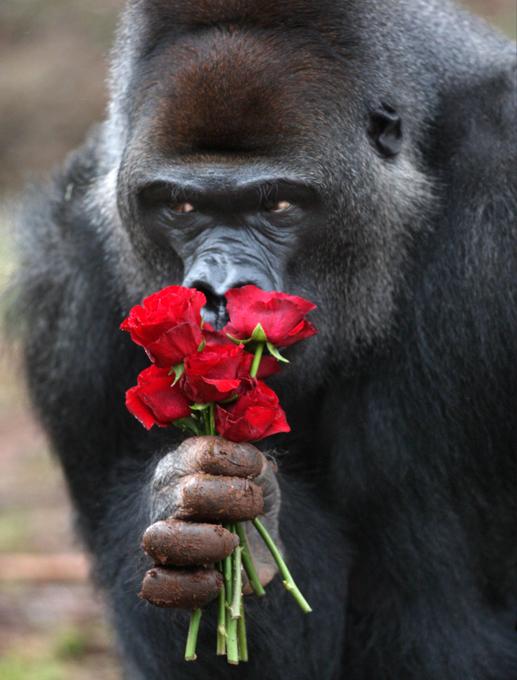 День Святого Валентина: Как выжить и не разлюбить?