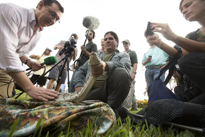 Интересное в мире Бил Бут (именно так зовут этого человека) собственноручно поймал его в рамках соревнования  Python Challenge   ( Брось питону вызов ), которое проходит в тропическом регионе Эверглейдс.   Интересное в мире, истории, новости
