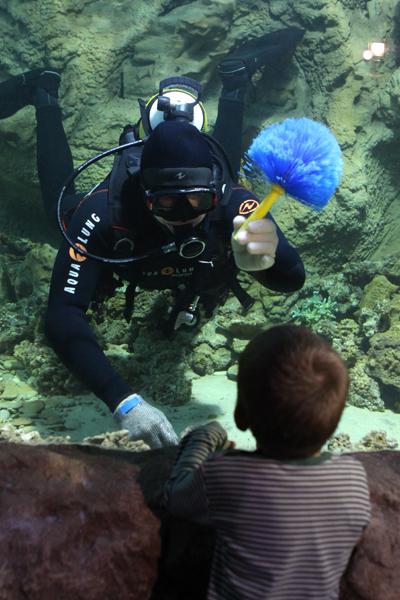 Первый океанариум в москве это первый