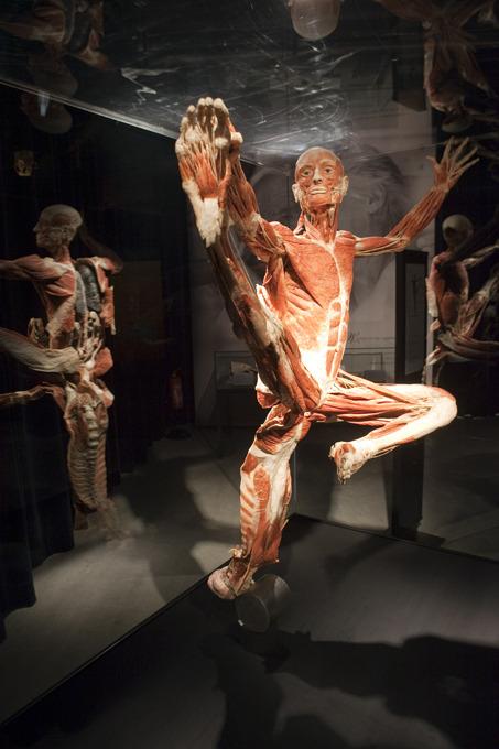 Мир тела В музее Буффало штата Нью-Йорк открыласьвыставка «Миры тела и история сердец» Фото: Splash/All Over Press мир тела,Гюнтер фон Хагенс,выставка