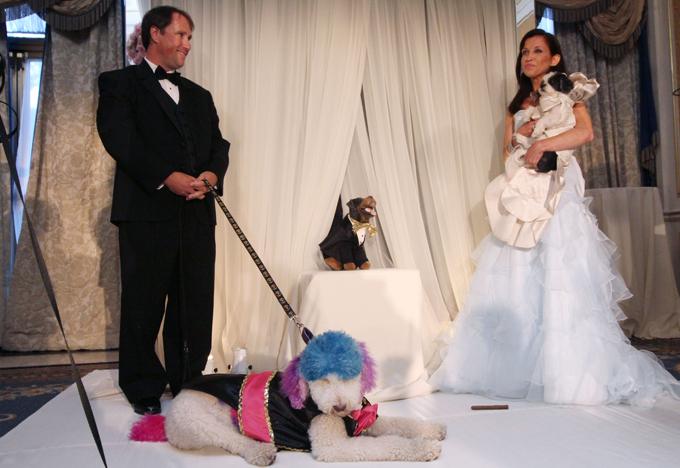 Собачья свадьба за $158000 Торжество для своей любимицы Бэйби Хоуп, а также пуделя по кличке Чилли Пастернак, устроила активистка движения по защите животных Уэнди Даймонд  Читайте: Интересное за неделю: собачья свадьба попала в книгу Гиннесса свадьба,собаки,рекорд Гиннеса