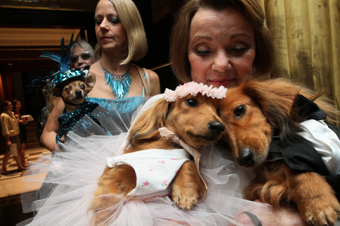 Собачья свадьба за $158000 Событие вошло в Книгу рекордов Гиннесса как самая дорогостоящая собачья свадьба.  Читайте: Интересное за неделю: собачья свадьба попала в книгу Гиннесса свадьба,собаки,рекорд Гиннеса